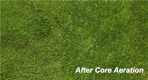 After Core Aeration