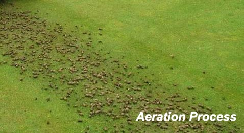 Core Aeration Process